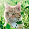 Amazing Cat Trivia