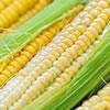 Corn Husking Relay