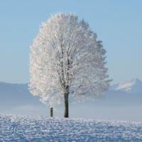 Winter - Northern Hemisphere (Dec 2020 21st)