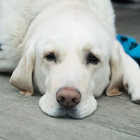 International Guide Dog Day (Apr 2021 24th)