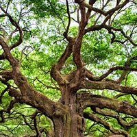 Arbor Day (US) (Apr 2021 30th)