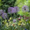 11 Garden Club Activities