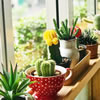 10 Easy-to-Grow Indoor Plants for the Elderly