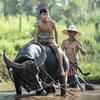 Trivia: Vietnam's Water Buffalo