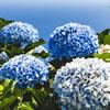 Flowers Quiz #2