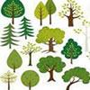 Type of Tree Word Scramble