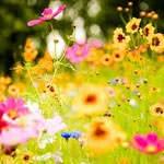 Spring (Southern Hemisphere) (Sep 2020 23rd)