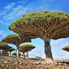 Monumental Trees of the World